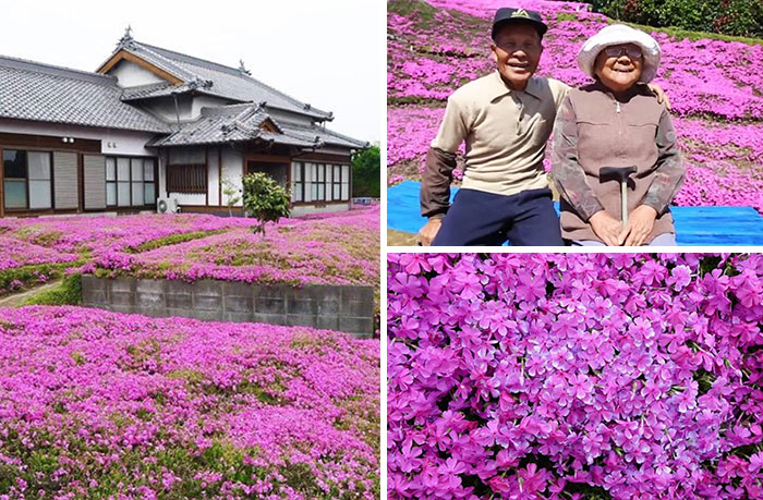 This Husband Spent 2 Years Planting Thousands Of Scented Flowers For His Blind Wife To Smell And Get Her Out Of Depression