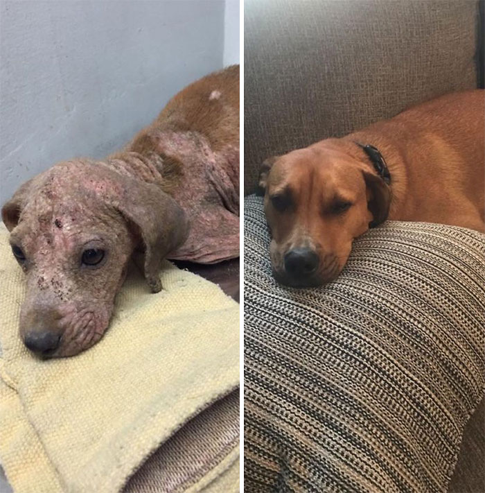 Barkley, Rescued From The Streets Of Puerto Rico And Loved Back To Health