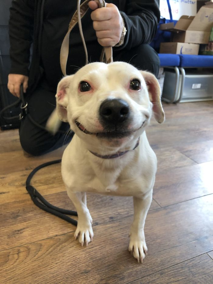 Stray Staffie With A Fabulous Smile Finds Her Forever Home