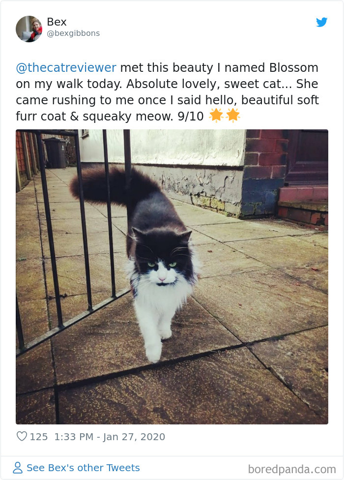 People-Review-Cats-Thecatreviewer