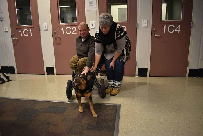 Special Needs Dog Returned 4 Times Is Finally Adopted By Someone Who Totally Gets Him
