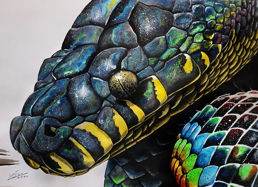 Boelen's Python