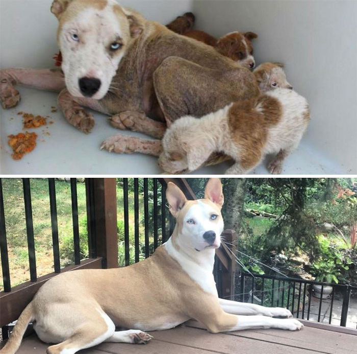 My Gorgeous Pupper With Her Puppies Before I Adopted Her And Now 3.5 Years Later