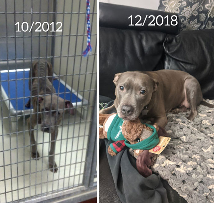 Adoption Day vs. Today. She Has Come A Long Way And Is Spoiled Rotten