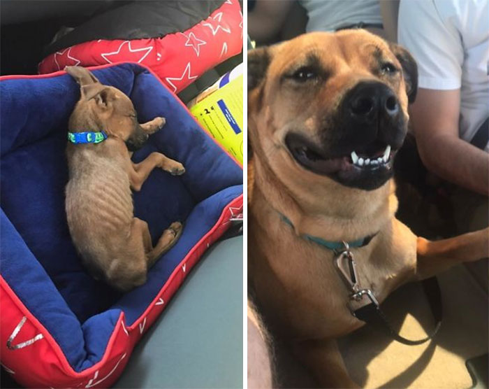 Rescued A Skeleton And Ended Up With This Sweet Girl Who Is Always Smiling