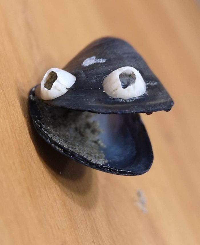 I Found A Mussel With Natural Googly Eyes
