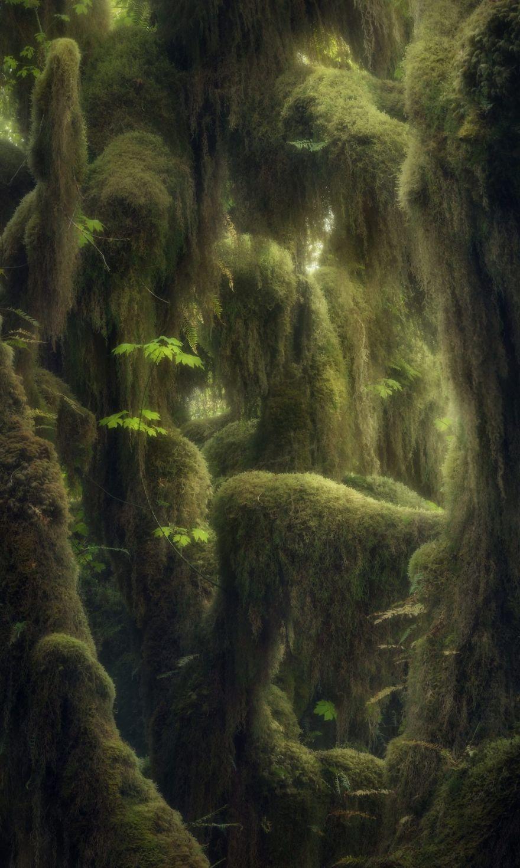 Hoh Rainforest, Washington, USA By Blake Randall