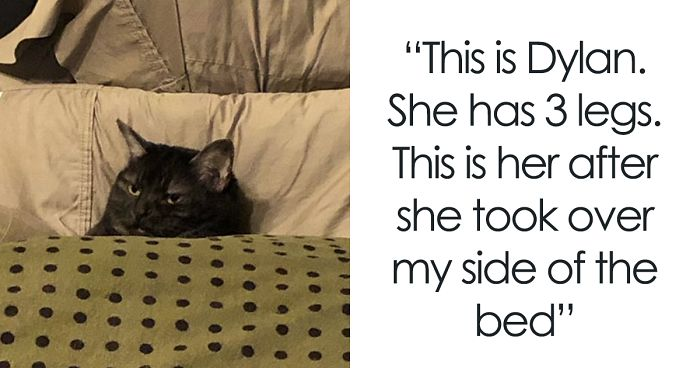32 Funny Times People Realized How Mean Their Cats Actually Are