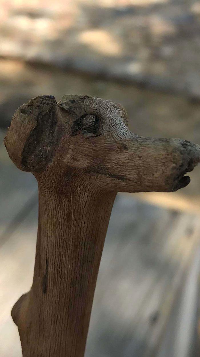 Dog Stick I Found