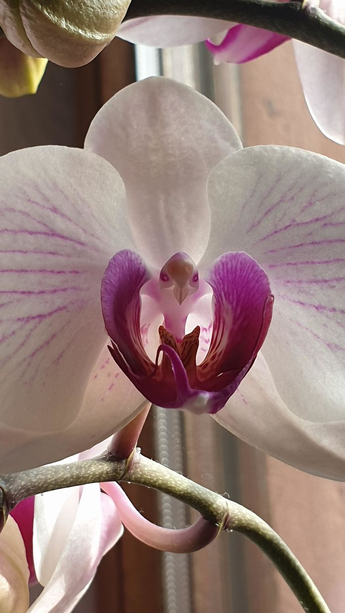 This Orchid Really Looks Like An Eagle