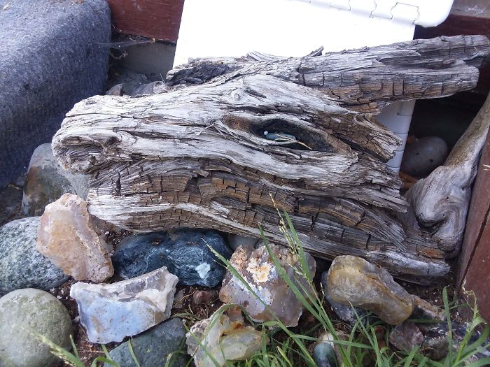 I Found A Piece Of Driftwood That Looks Like A Dragon's Head
