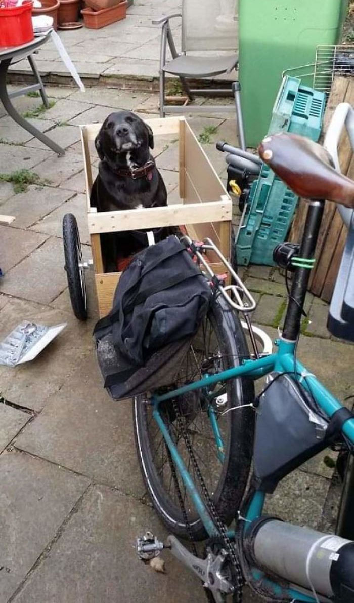 My Ancient Rescue Pupper In His Trailer. He Is 13 And Goes Everywhere With Me, Even Out On The Bike.