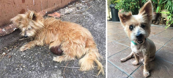 This Is Casey, A Senior Who Was Used For Breeding Then Dumped On The Roadside With A Very Large Tumor & A Blind Eye
