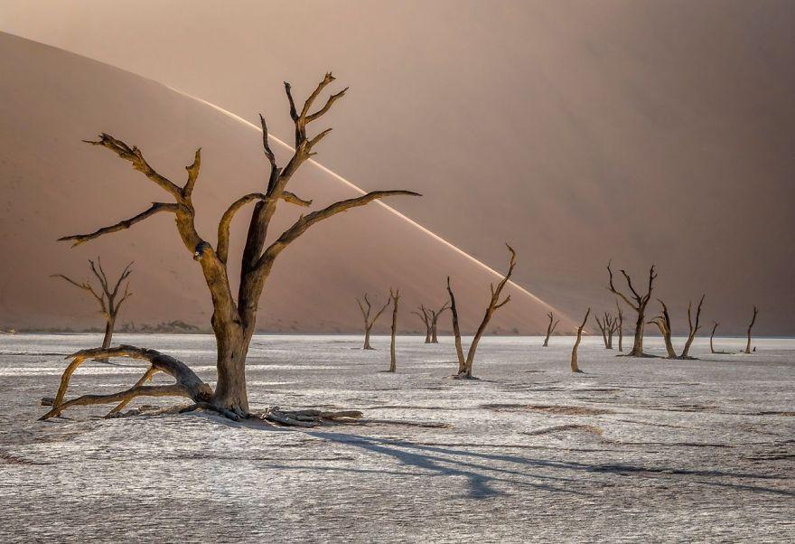 Deadvlei, Namib-Naukluft Park, Namibia By Tomasz Szpila