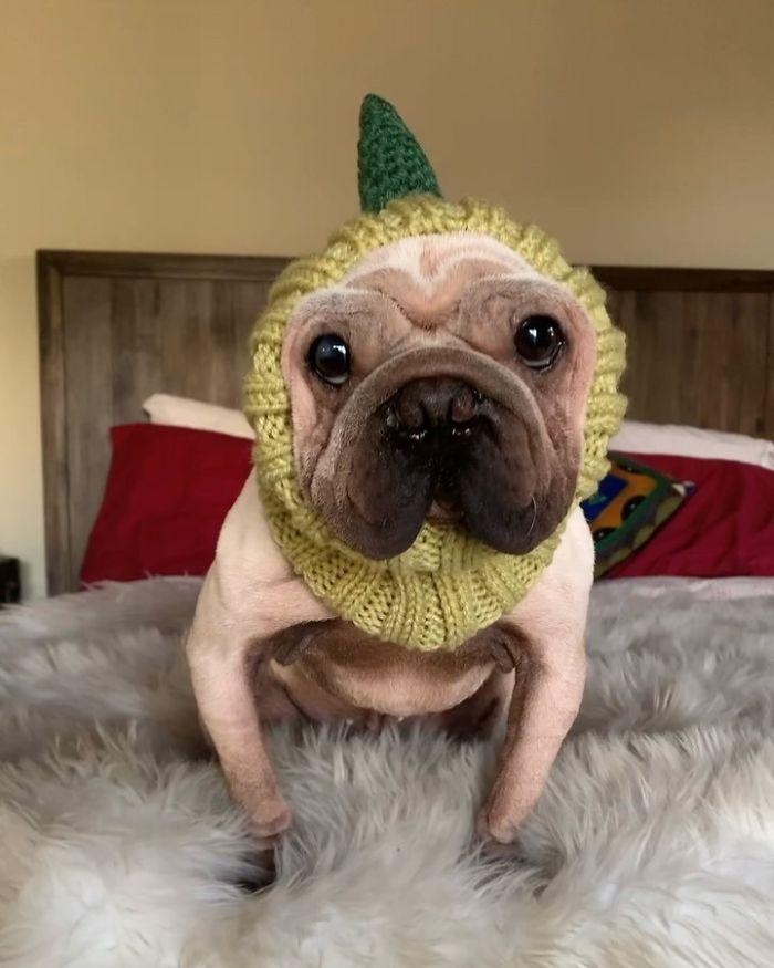 Baby Yoda Dog