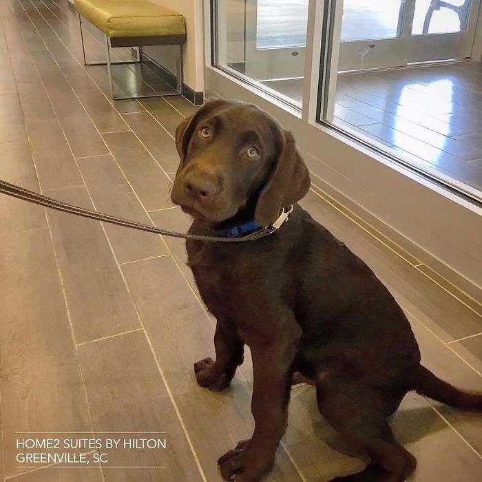 Hotel-Guests-Foster-Dogs-Adoption