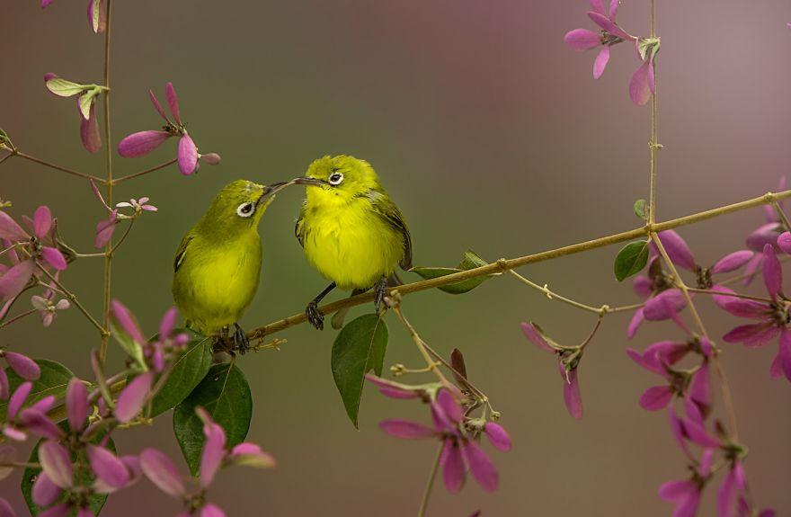 Birds Kiss