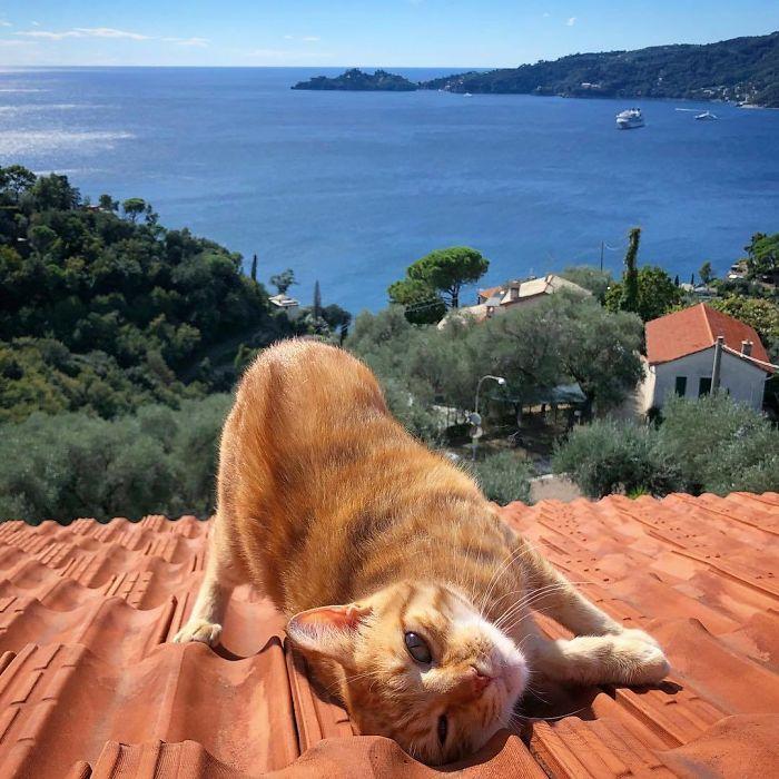 Cat-Daily-Life-Photo