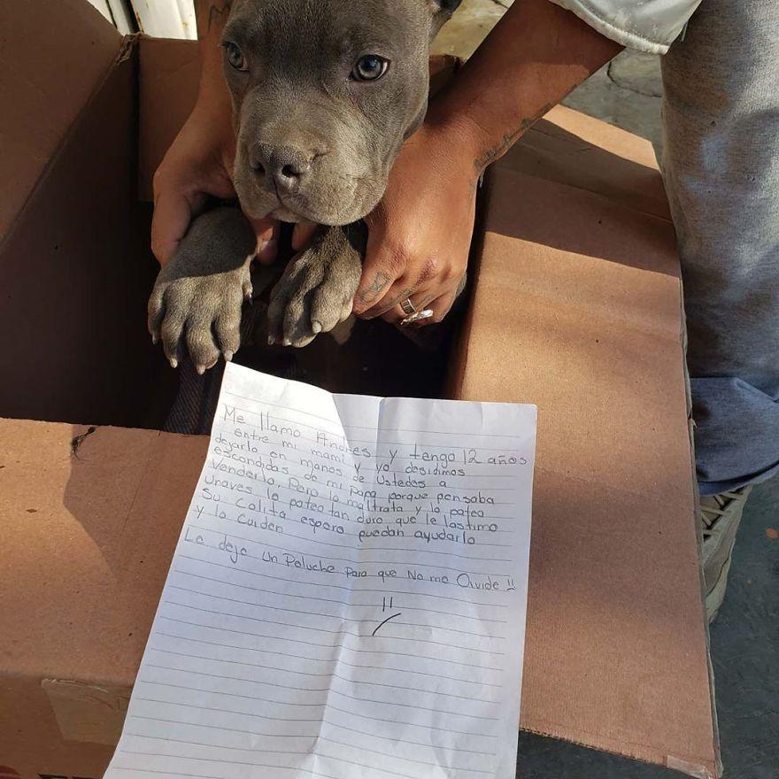 Мальчик оставил щенка