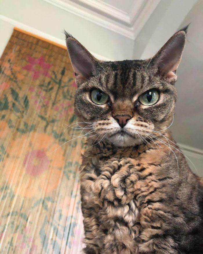 Angry-Looking-Cat-Grumpy-Barbara