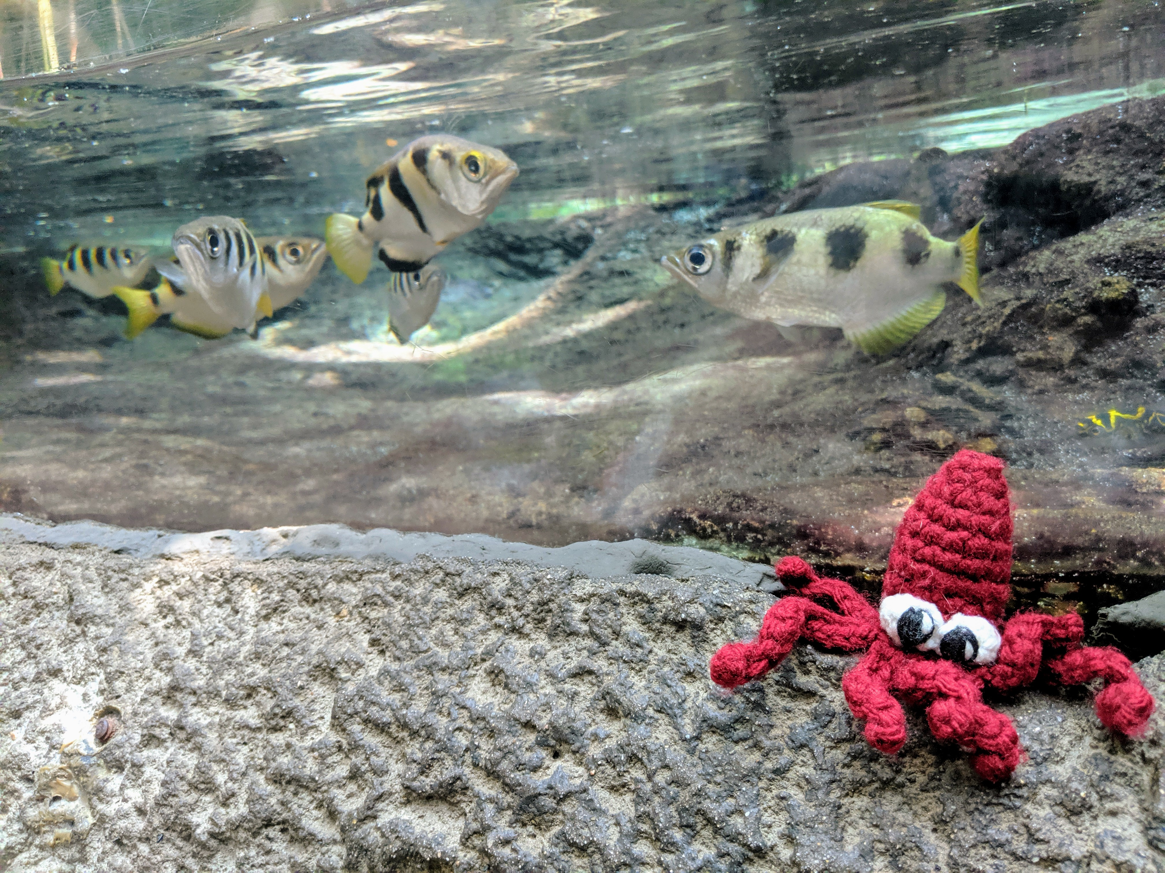 Squid Finger Puppet Goes On Amazing Adventures
