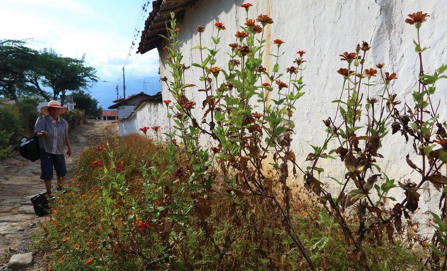Flower Harvest, Guané