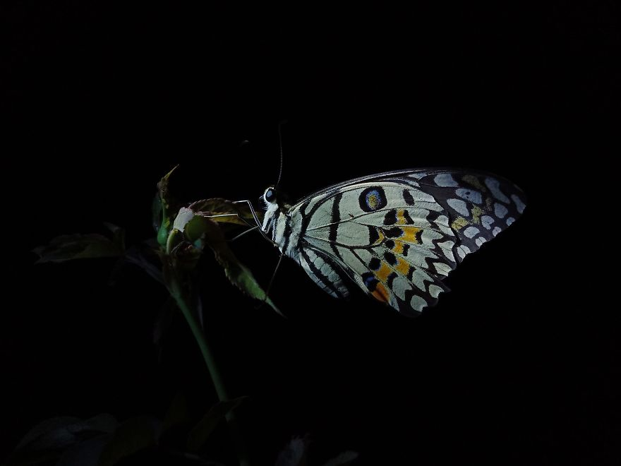 Night Of Butterfly