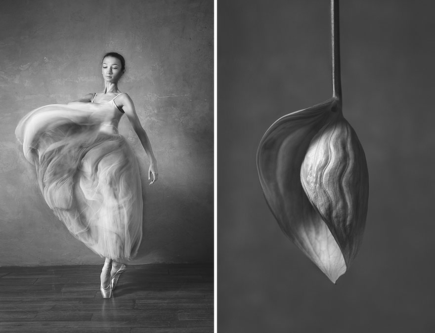 This Photographer Shows Similar Movements Of Ballet With Flowers