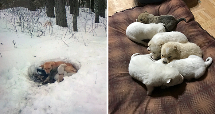 Litter of 6 Survives In The Cold Due To The Caring Love Of Their Mother, Gets Saved By The Locals