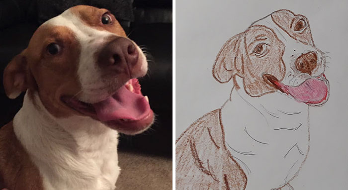 Bad-Pet-Drawings-Wisconsin-Humane-Society-Donation