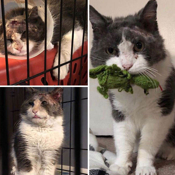 From Feral To Friend (Harry's Story). Last January, We Received Word That There A Was A Feral Cat Found With A Terrible Head Wound. He Was On Death's Doorstep. We Took Him In To Recover And 8 Months Later He Won't Leave Our Side
