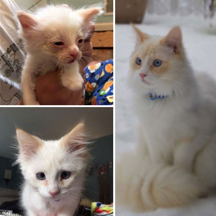 before and after fostering a cat