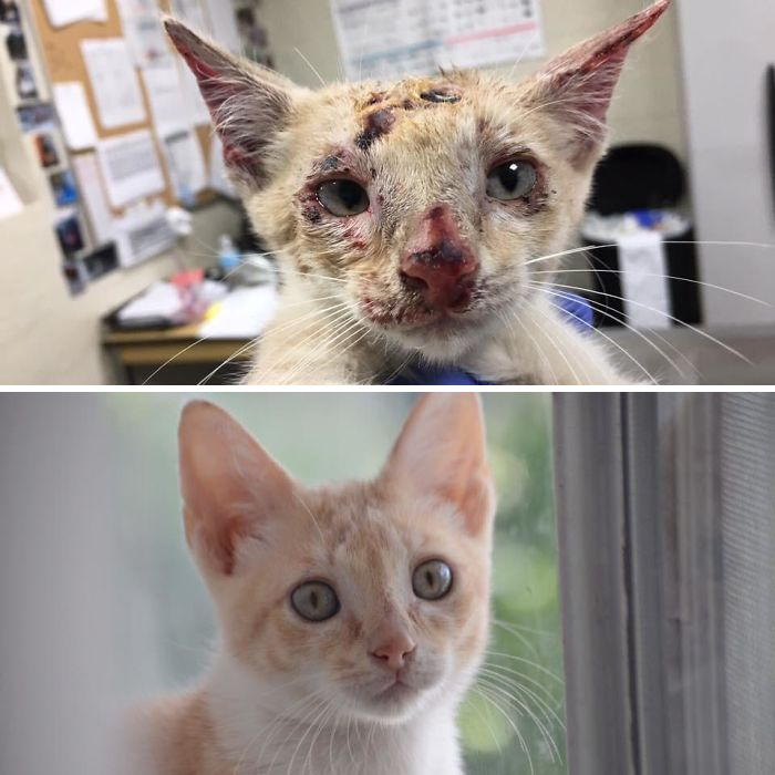 Before And After Fostering. Roadrunner On The Day I Got Him From The Shelter, And On The Day He Went To His New Home