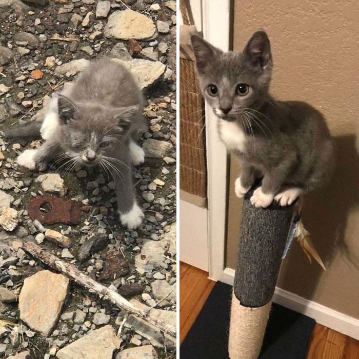 One Month Ago, I Found This Baby In The Wheel Of My Forklift At Work. Now She Lives At Home With Me. Meet Emmy (6 Weeks vs. 10 Weeks)