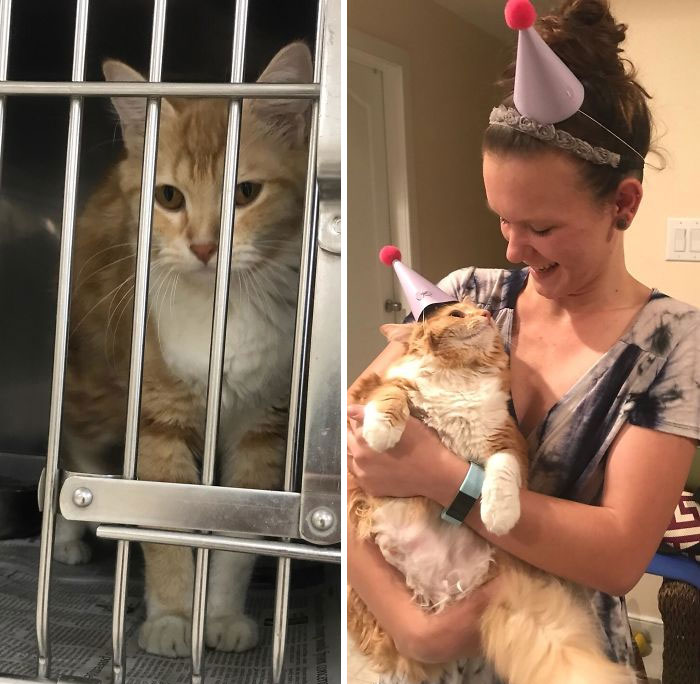 When I First Saw Her Sela Was A Sick, Underweight, Flea Infested Stray The Local Pound Picked Up. Today We Celebrated Her 1 Year Adoption Day, Matching Party Hats And All!