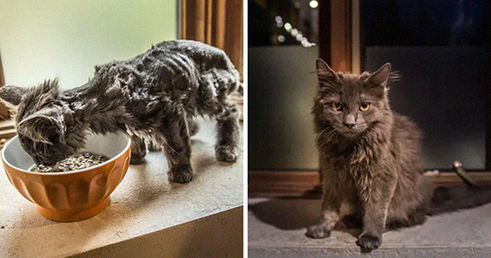 This Online Community Shares How Their Adopted Cats Looked Then & Now And It's Heartwarming (30 Pics)