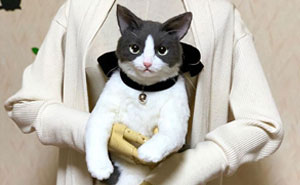 Japanese Artist Continues To Create Bags In The Shape Of Cats And The Realism Is Impressive