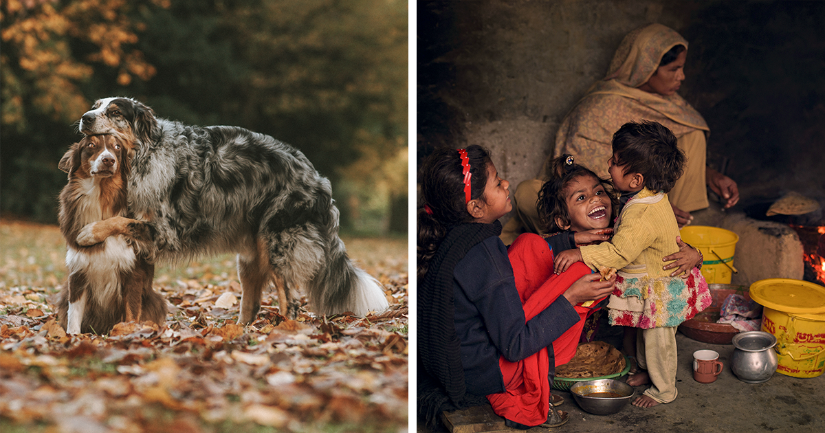 Photographer Spends 40 Years Taking Pics Of Dogs All Around The World (49 Pics)