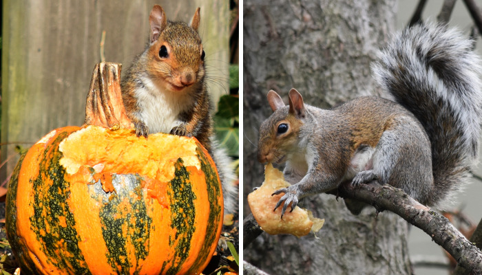 I Photograph A Squirrel For Every Time Of The Year