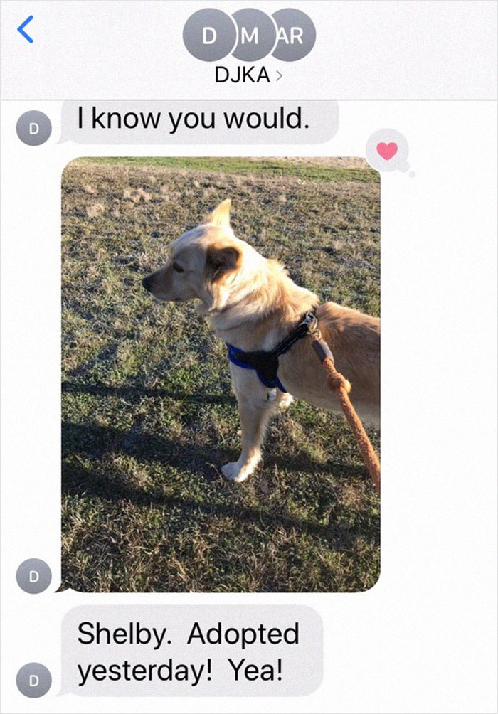 Retired Dad Walks Dogs In An Animal Shelter, Sends Bios Of Each One To His Daughter, People Adore Him