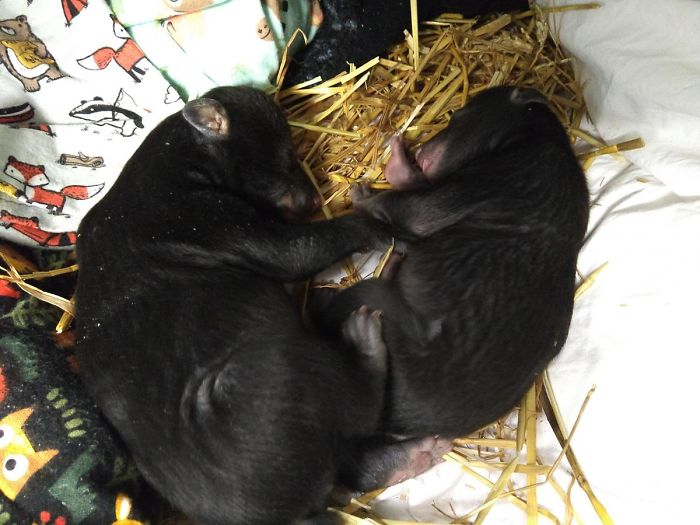 Dog Brings Home A Baby Animal, Turns Out It's A Bear Cub