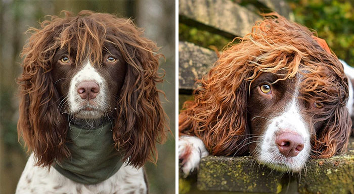 This Cute Dog Has Such Fabulous Hair That It Has Made Him Instagram Famous