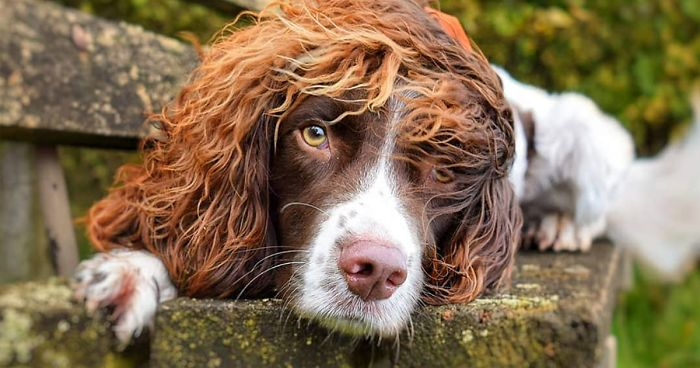 This Adorable Pup Has Better Hair Than Many People
