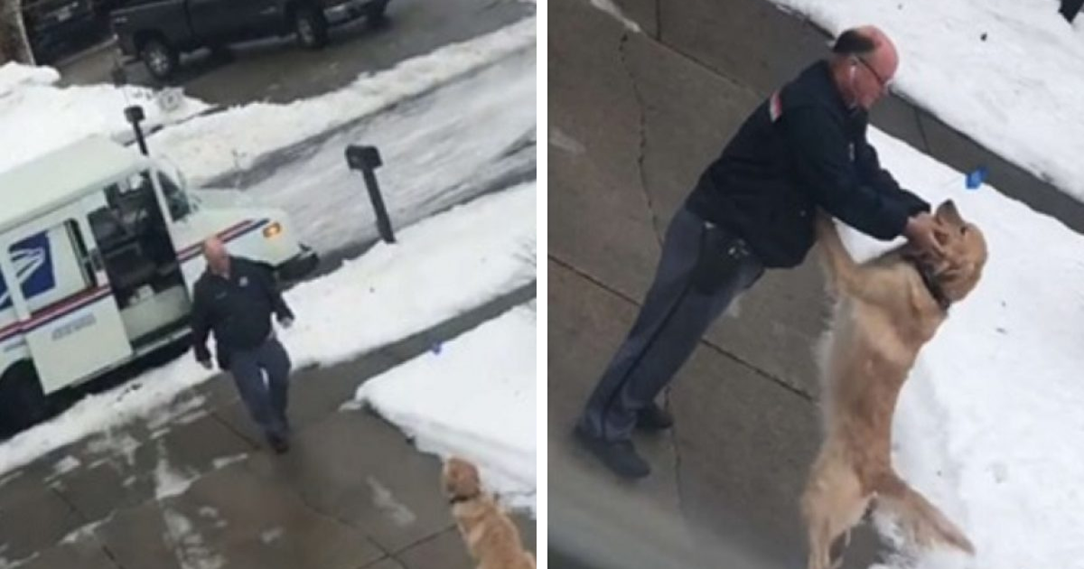 This Good Boy Waits Every Day To Get A Hug From His Favorite Mailman - bored panda