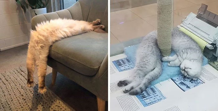 People Are Sharing Pics Of Their Long Cats That Seem To Stretch 'Til Infinity (30 Pics)