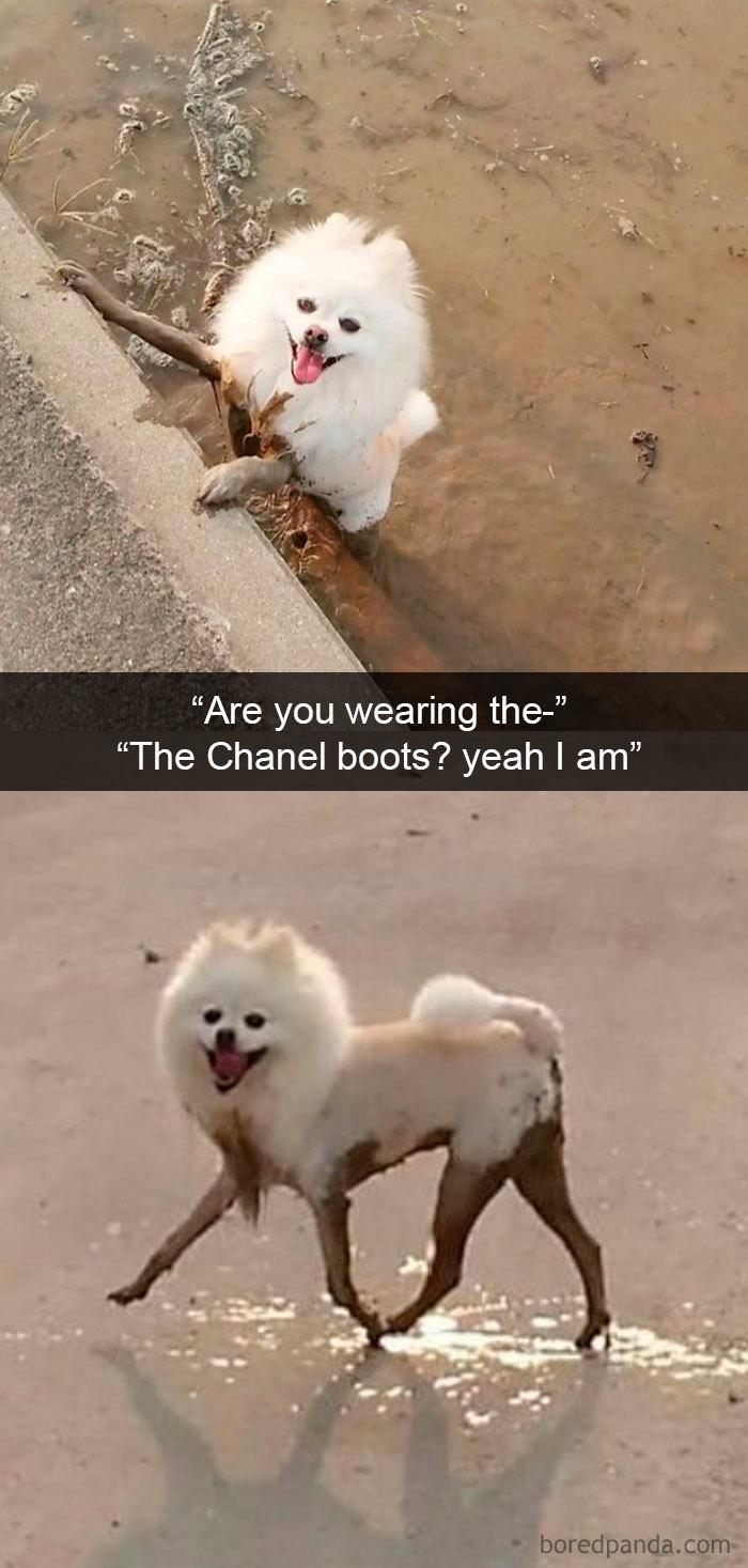 Funny-Hilarious-Dog-Snapchats