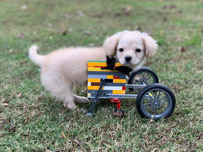 This Unwanted Puppy Gets Another Chance At A Happy Life With A LEGO Wheelchair Made By 12 Y.O.