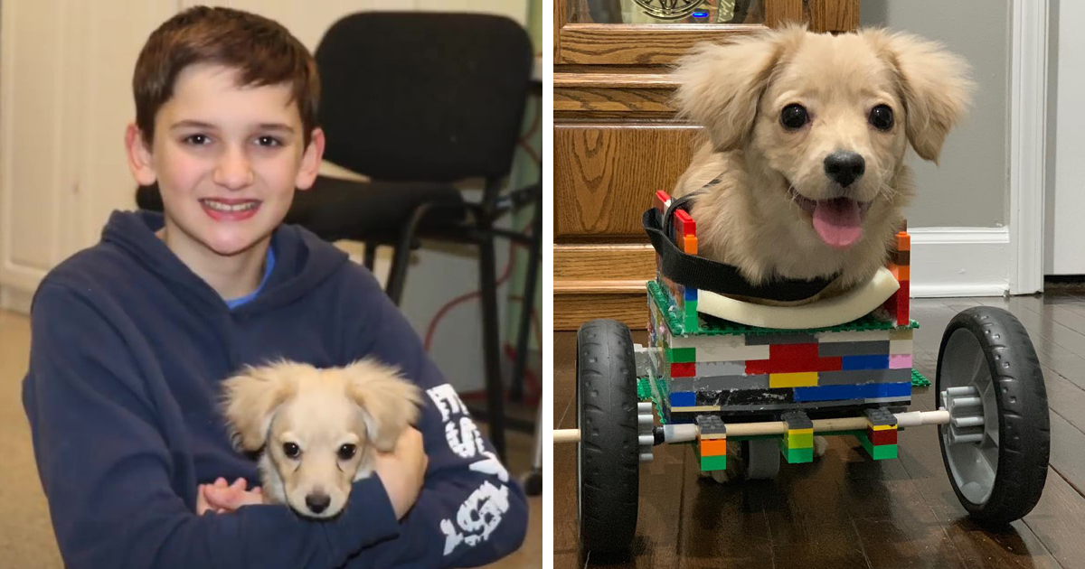 12 Y.O. Boy Builds A Wheelchair For A Puppy Who Was Abandoned For Being Disabled