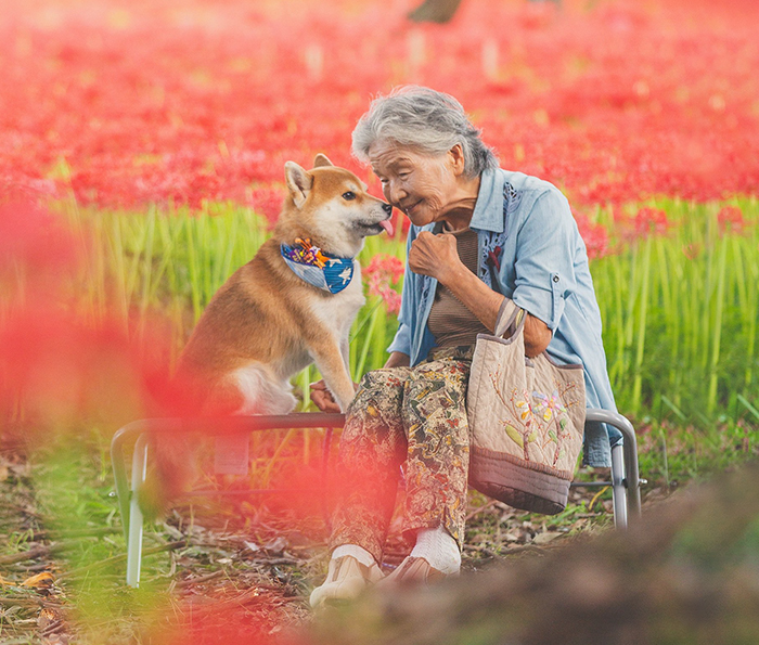 Grandson Captures The Heartwarming Bond Between His Grandma And Her Shiba Inu In 30 Beautiful Pics
