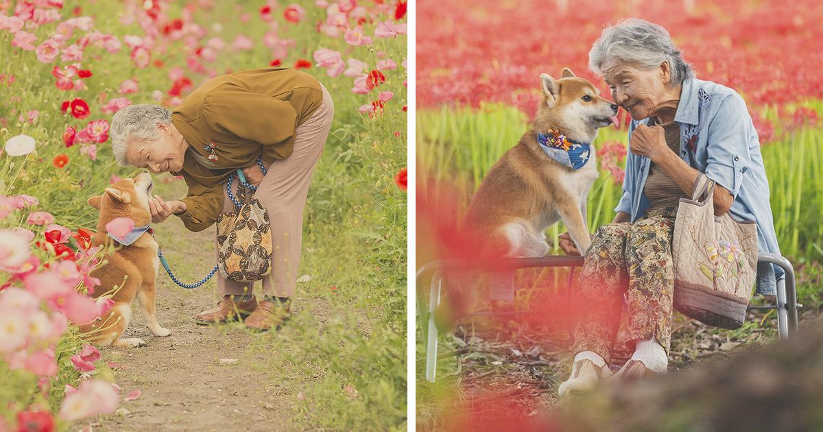 Japanese Photographer Takes Beautiful Photos Of His Grandma And Her Shiba Inu (59 Pics)